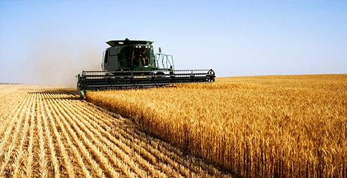 Cognitive food: Grain management