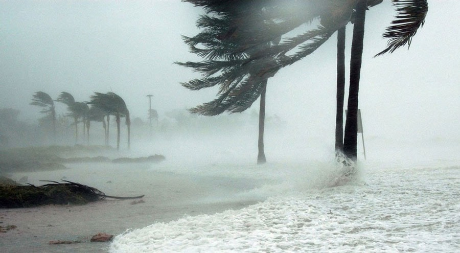 palm trees blown in the wind during a storm with ocean water rushing past