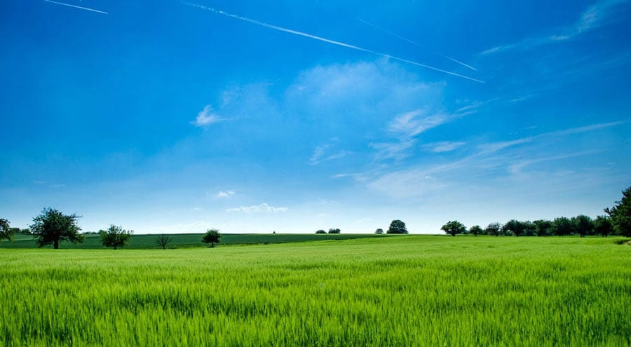 green open field with bright blue sky above