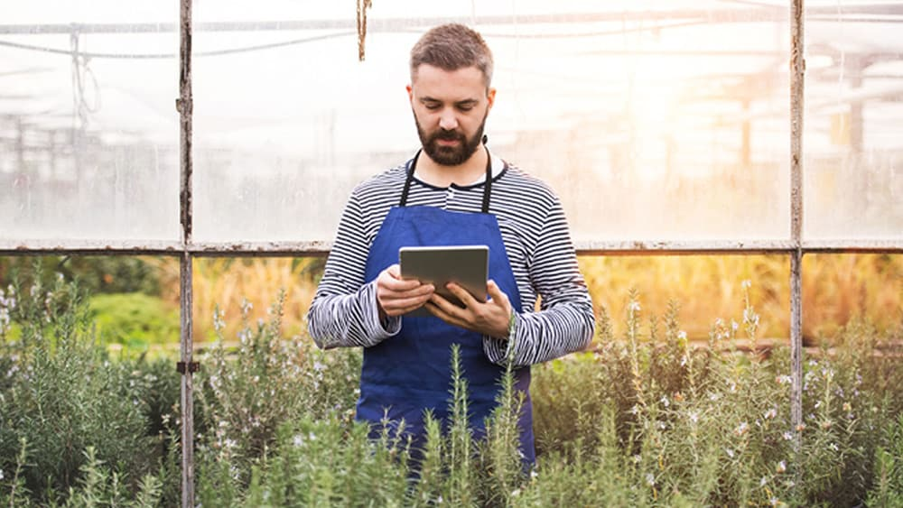 A man stands in a greenhouse looking at a tablet computer to represent effective API management