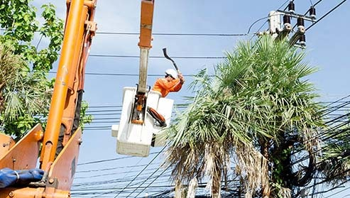 Tree being trimmed away from power lines for vegetation management