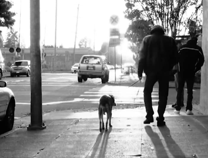 Man walking on the sidewalk with his dog, and some cars on the street