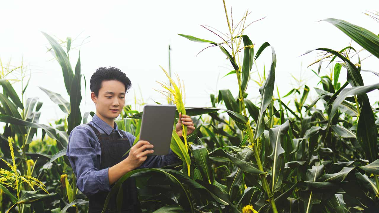 A man using a tablet to help him with the harvest