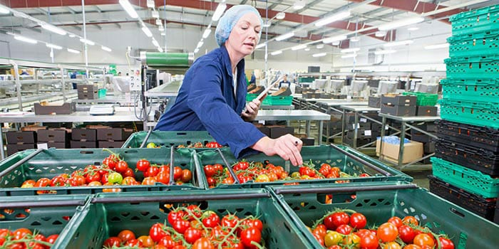 An employee checking the tomatoes stock