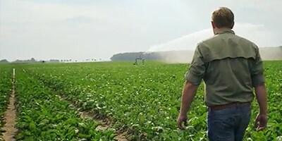 Man walking through a field of short green plants