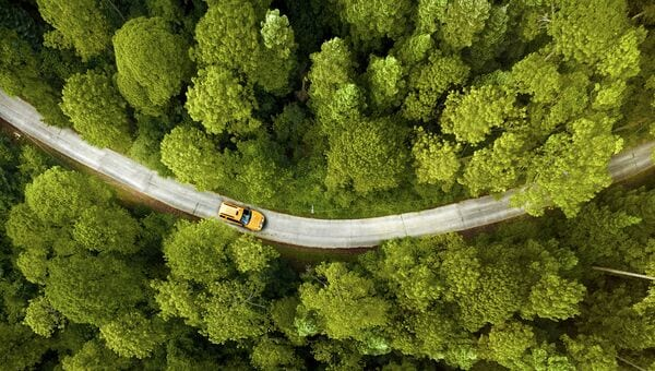 Image of a car driving through trees