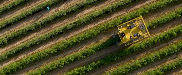 Harvester on plantation field