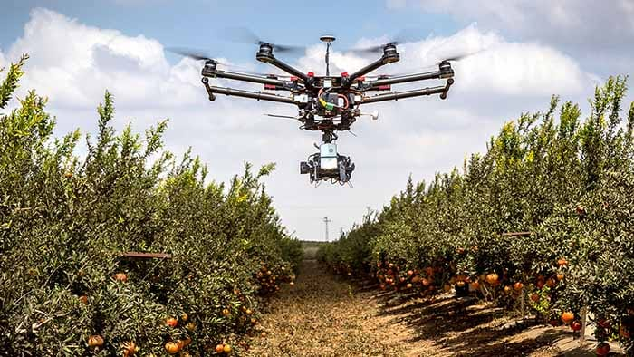Drone flying in an orange grove