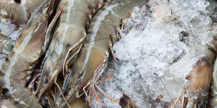 shrimps in the ice
