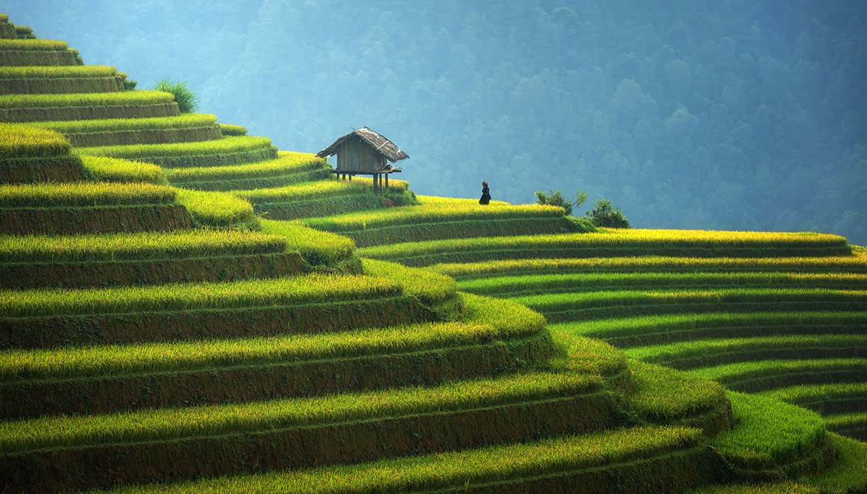 Terraced farmland in Indonesia