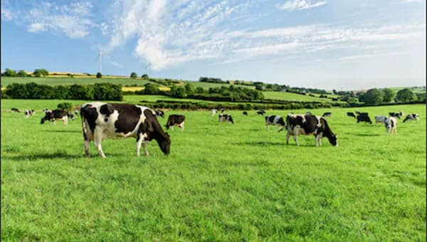 Dairygold success story