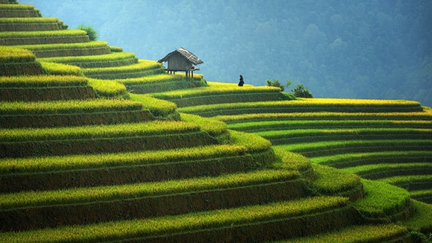 A hut sitting on a staggered grassy mountainside in Indonesia