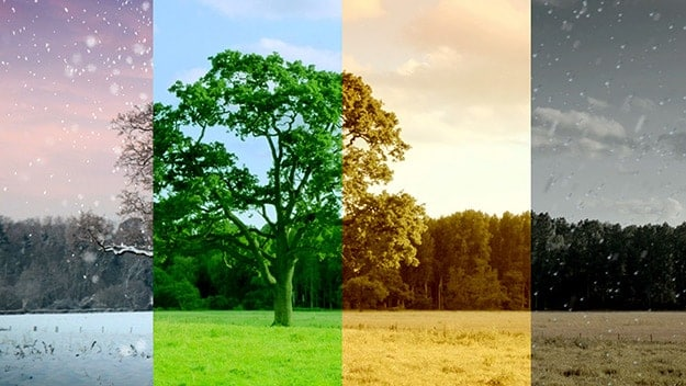 Tree in an open field represented in different colors for each season