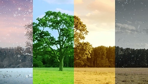 an image of a tree with a backdrop of other trees, and this single image is divided among four different color tints