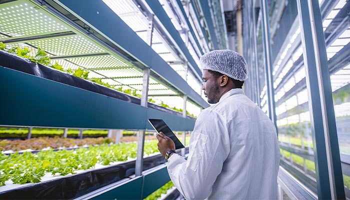 Worker in indoor farm monitoring plants with a tablet