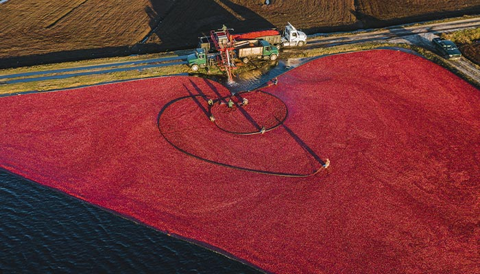 Cranberry bog operation