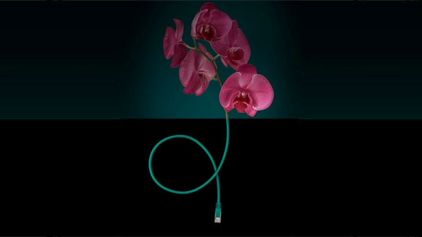 Illustration showing orchid and telephone cable