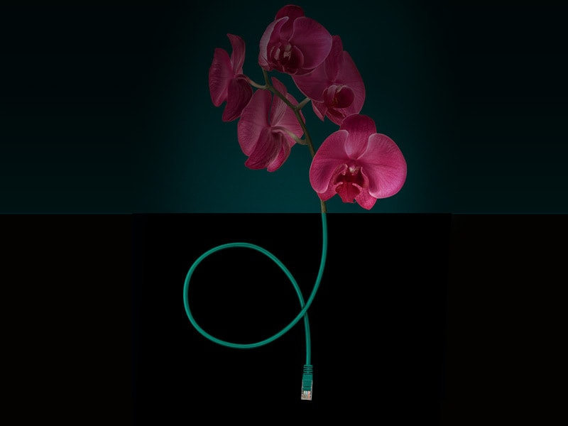 flower with ethernet cable