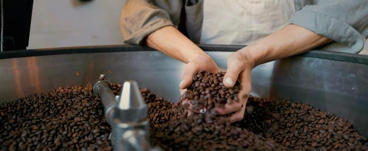 Hands grabbing coffee seeds from a big seeds container