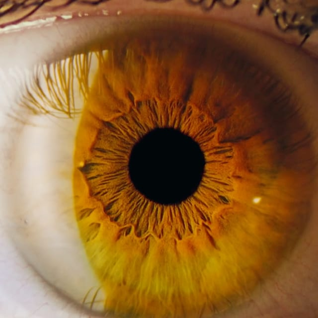 closeup color photo of an eye