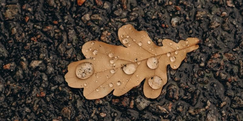 Leaf on the ground with drops of water