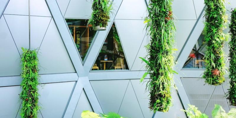 Plants hanging outside a white building